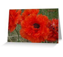 Double Poppies Greeting Card