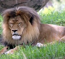 The Lion Sleeps Tonight by CatKV
