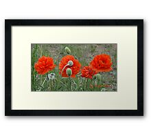 Poppy Panorama Framed Print
