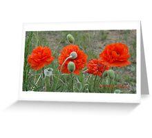 Poppy Panorama Greeting Card