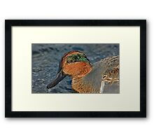 Profile of a wet green winged teal  Framed Print