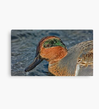 Profile of a wet green winged teal  Canvas Print