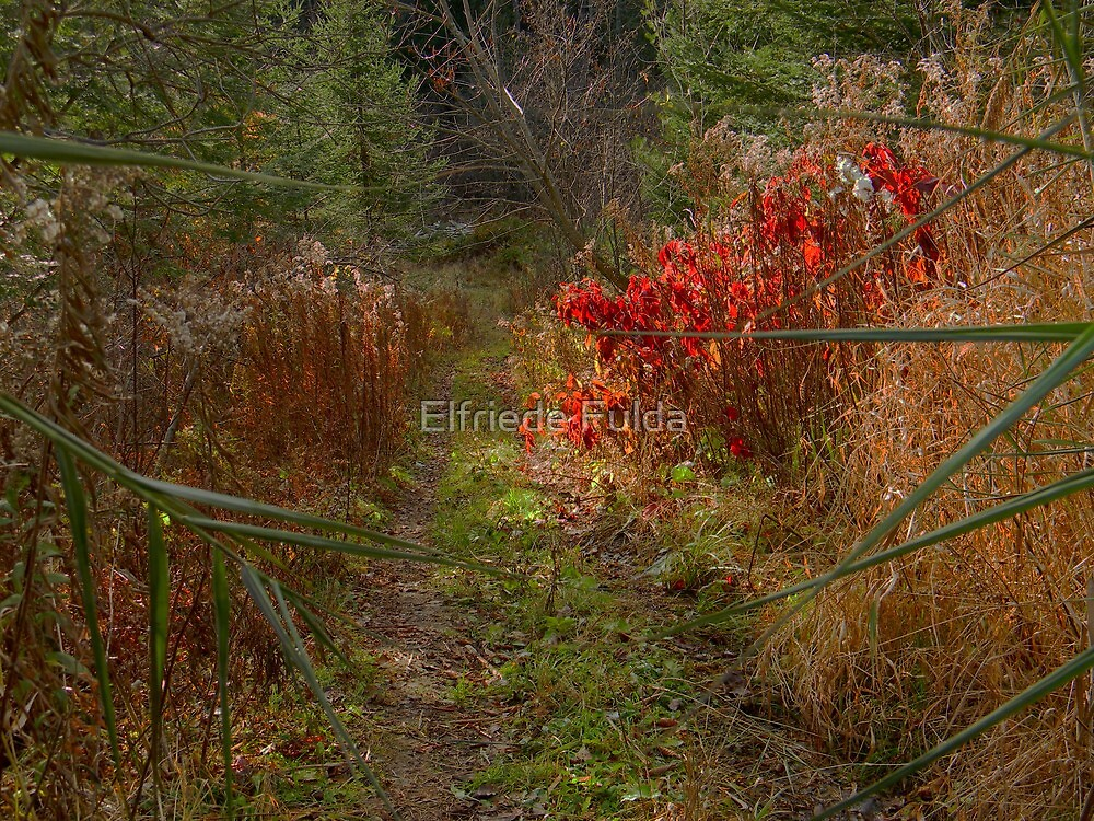 The Last of Autumn ! by Elfriede Fulda