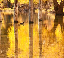 Glowing Gold by Gary Lange