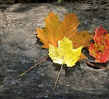 Shades of Fall by Monte Morton