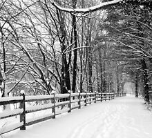 Wintery Walk in the Woods by Mark Van Scyoc