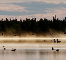 Birds in Paradise by May-Le Ng
