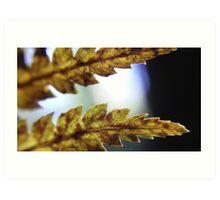 small fern Art Print