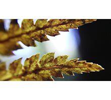 small fern Photographic Print