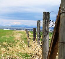 Barbed Wire by Alyce Taylor