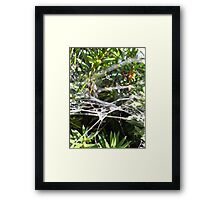 Seriously, its a Trap! Framed Print