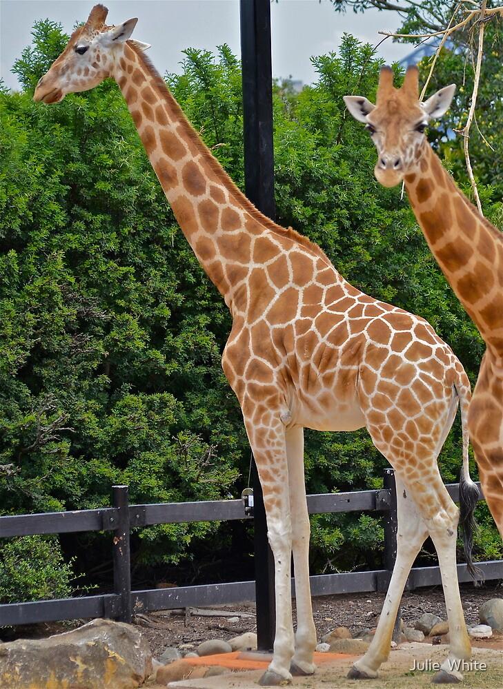 Giraffe Encounter. by Julie  White