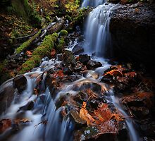 Fairy Falls II by Tula Top