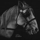 White Horse by Kerina Strevens