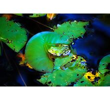 Frog in pond Photographic Print