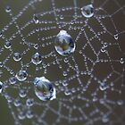Spider Bling by Astrid Ewing Photography