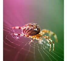 Spidery  Photographic Print
