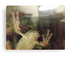 Frog On Glass Canvas Print
