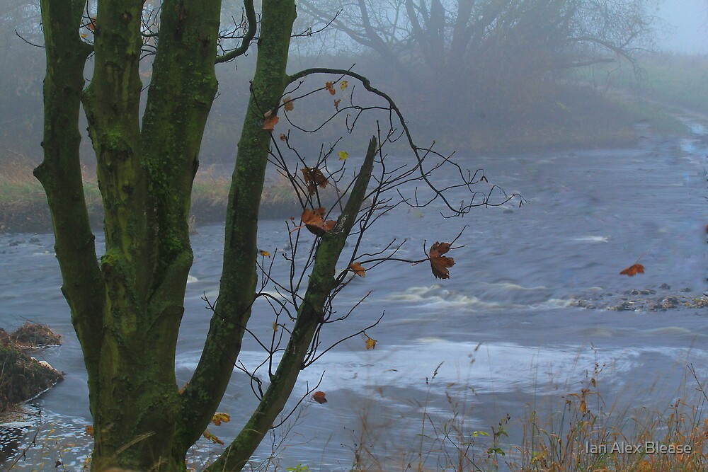 November Sycamore tree on Foggy day alongside the River Tees, by Ian Alex Blease