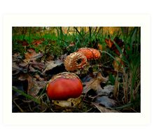 All Of A Kind ~ Amanita muscaria ~ Art Print