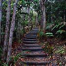 Pinnacle Path by Paul Dean