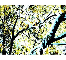 Snow in Fall  Photographic Print
