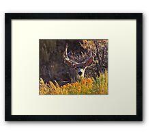 Clever Buck Framed Print