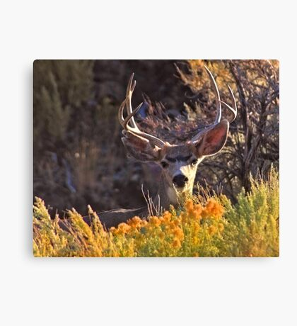 Clever Buck Canvas Print