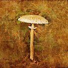 Wild mushroom with textures by LisaRoberts