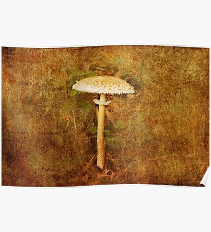 Wild mushroom with textures Poster
