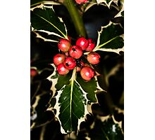 Holly With Berries Photographic Print