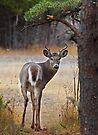 Gotcha! - White-tailed Deer by Jim Cumming
