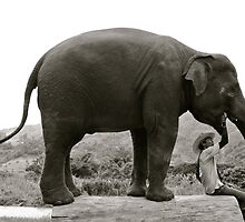 The Elephant and her Mahoot by MeganPreece