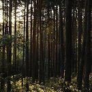 Carcasa iPhone bosque de pinos / iPhone case pine forest by Carlos  Acín