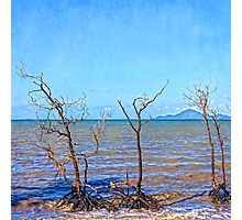 Dead mangroves after a cyclone Photographic Print