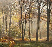 Autumn Light by Photokes