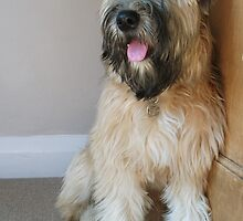 Cute English Soft Coated Wheaten Terrier 'Nutmeg' by Luketxx