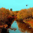 La Salle River by Larry Trupp