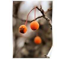 Crab Apple Poster