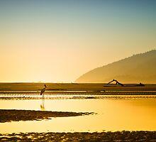 Jabiru on a Hazy Morning by PhotoByTrace