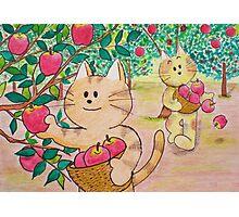 Apple Orchard Photographic Print