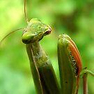 praying mantis by tego53