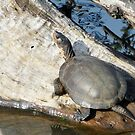 turtle getting some sun by tego53