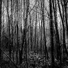 The Dark, Dark Woods by joerelic37