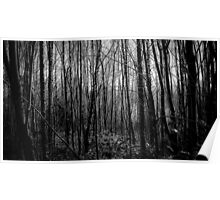 The Dark, Dark Woods Poster