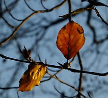Duet in the Autumn sunshine by Themis