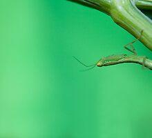 Tiniest Acrobat by Belinda Osgood