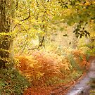 Autumn Lane .. by Mike  Waldron