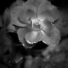 Dark Rose by Robin Lee