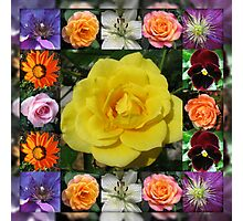 Vibrant Summer Flowers Collage featuring Roses Photographic Print